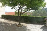 In tipica casa ligure 2 alloggi con grande terrazzo, solarium, giardino e box auto